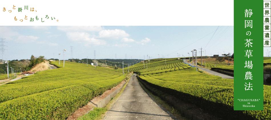 世界農業遺産「静岡の茶草場農法...