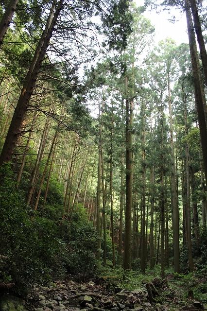 松葉の滝3